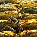 fresh-blue-crabs