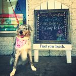 reters-dog-sign